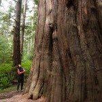 Layerslider Forest_CristinaMittermeier