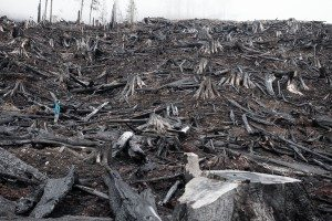 Vancouver Island clearcuts - Photo by TJ Watt