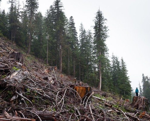 Logging Walbran photo by TJ Watt