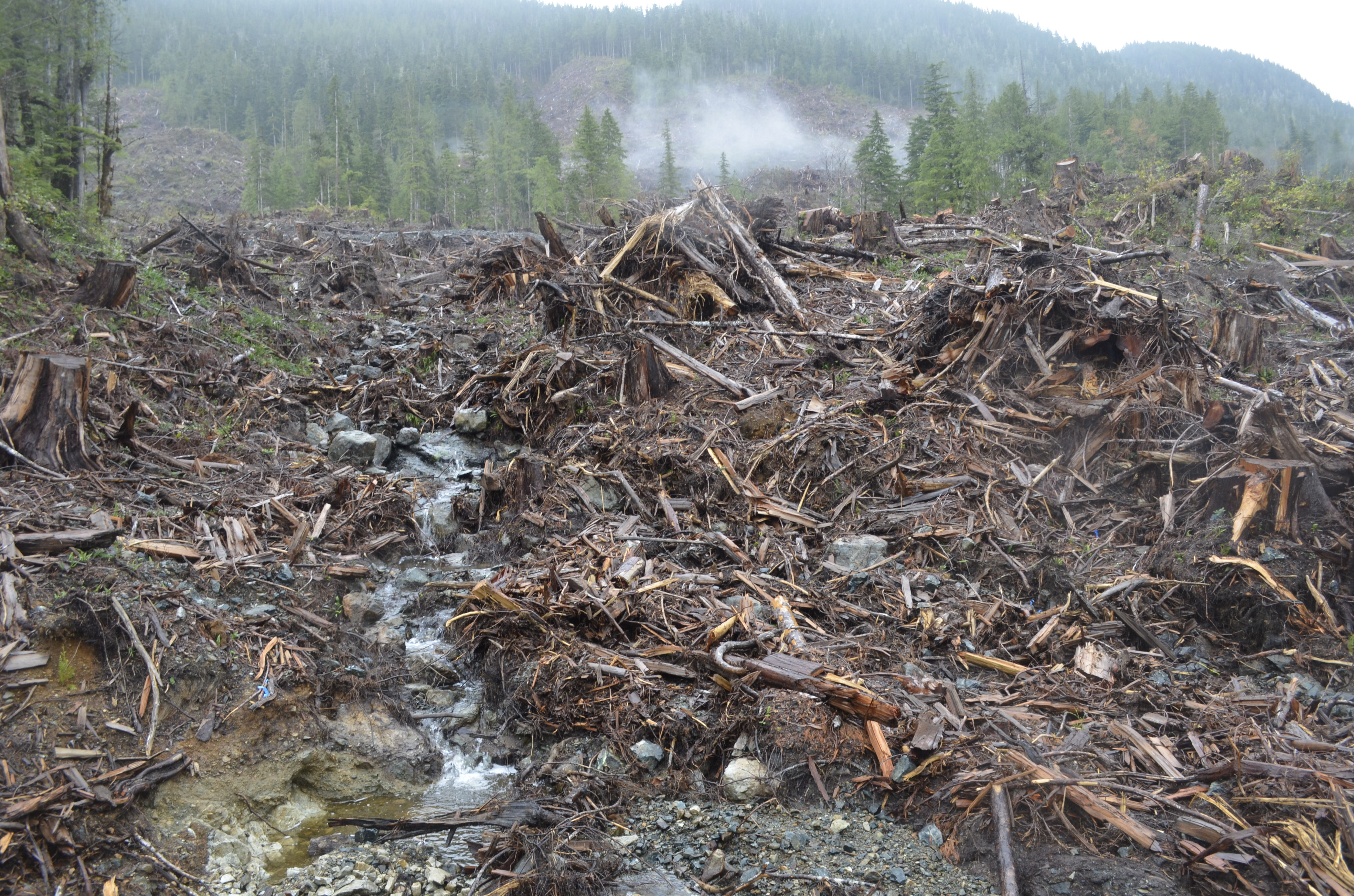 Logging Operations Vancouver Island