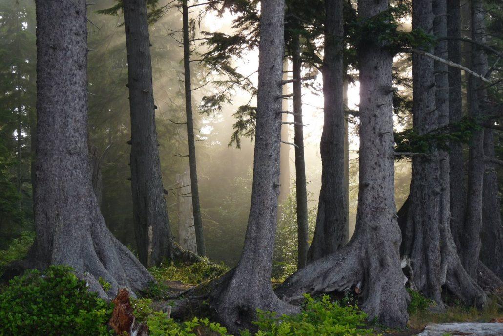 big tree trunks light_Jens Wieting
