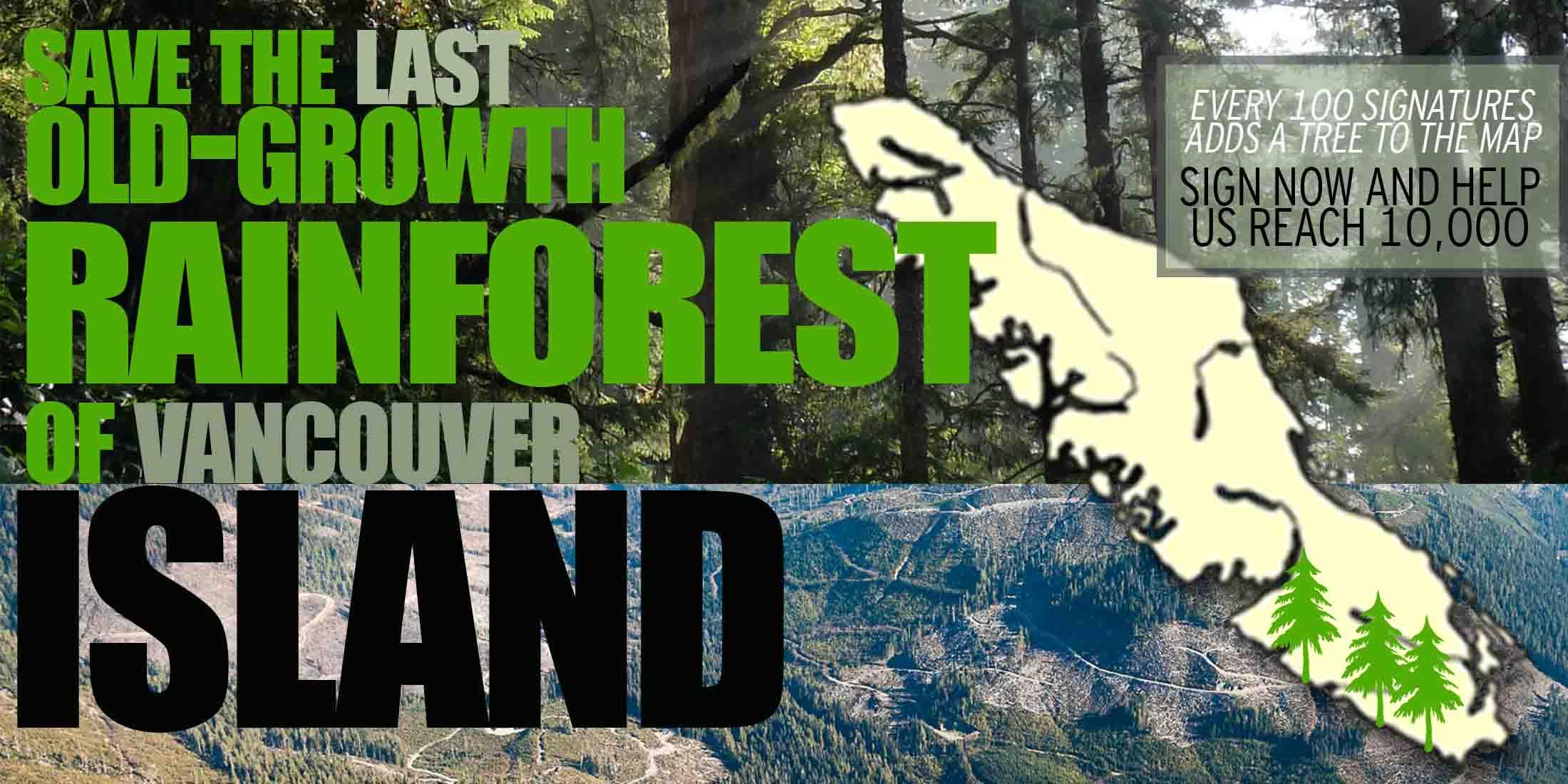 Rainforest image test 2