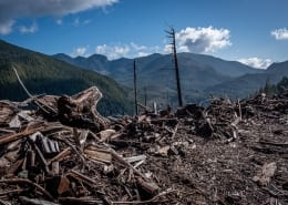 This logged hill looks over a mosaic of cutblocks outside Port Renfrew.