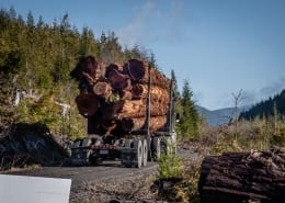 A logging truck sends off fresh cuts from one of the last remaining old-growth stands in BC. (Photo by Mya Van Woudenberg/Sierra Club BC)