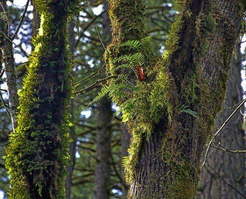 ferns on trees