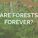 Are forests forever banner