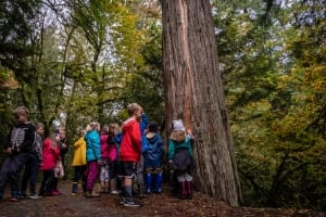 A school group connects with a culturally modified tree. Photo by Mya Van Woudenberg/Sierra Club BC