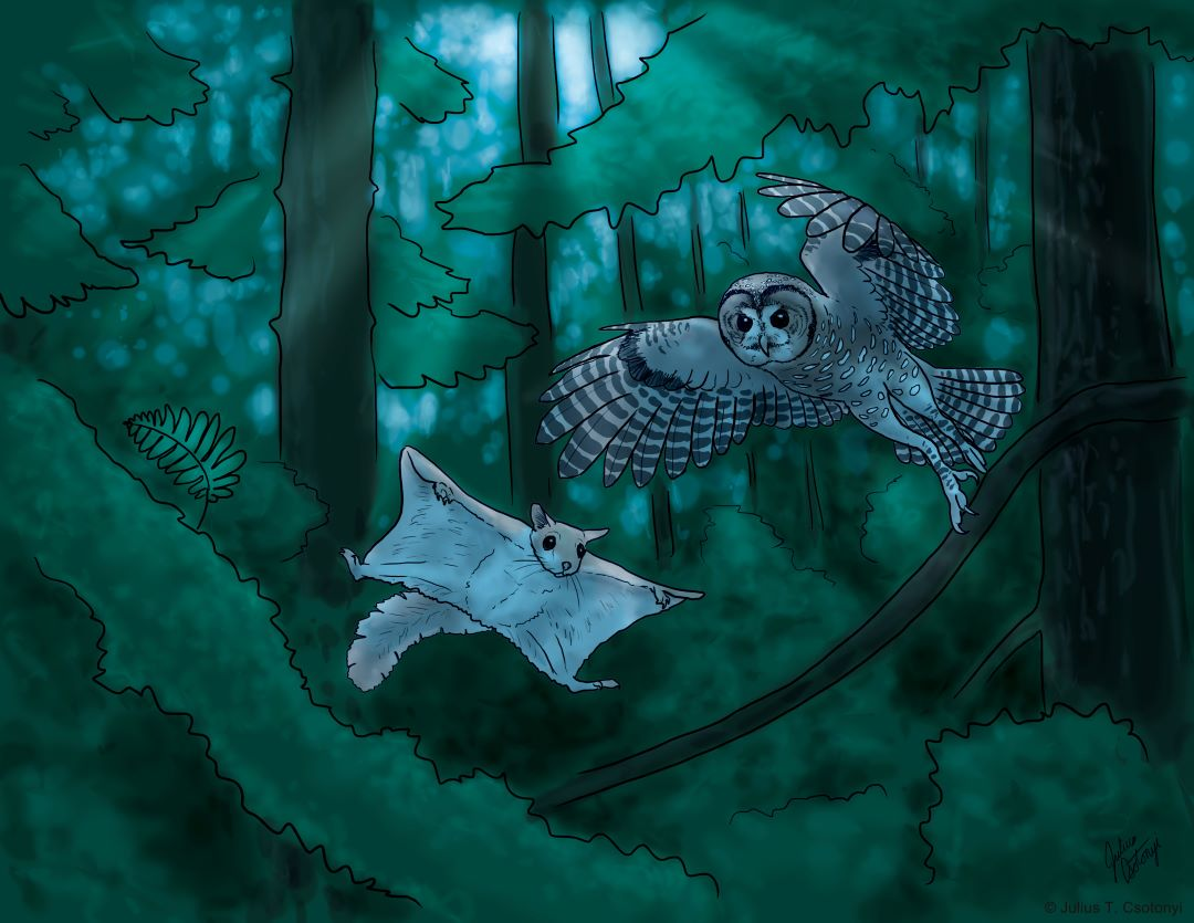 Spotted owl in the moonlight by Julius Csotonyi