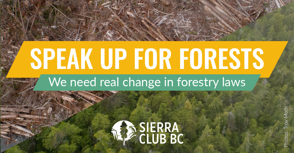 We need real change in forestry laws