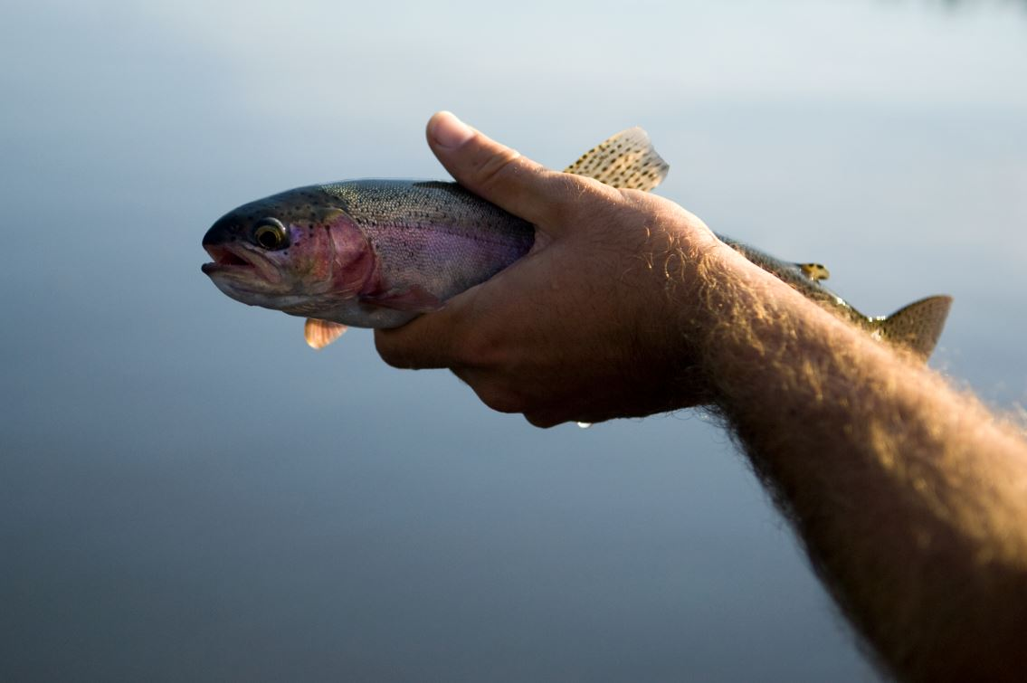 A trout caught in Fish Lake, BC