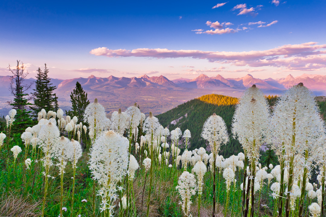 flathead, mountains, wildflowers, flowers