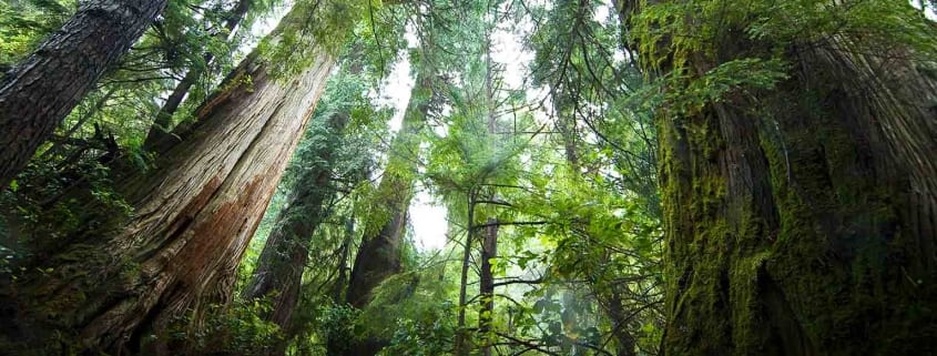 Forest webinar series header