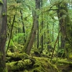haida gwaii, gwaii haanas, forest, sierra club bc, 50 places, 50 places project