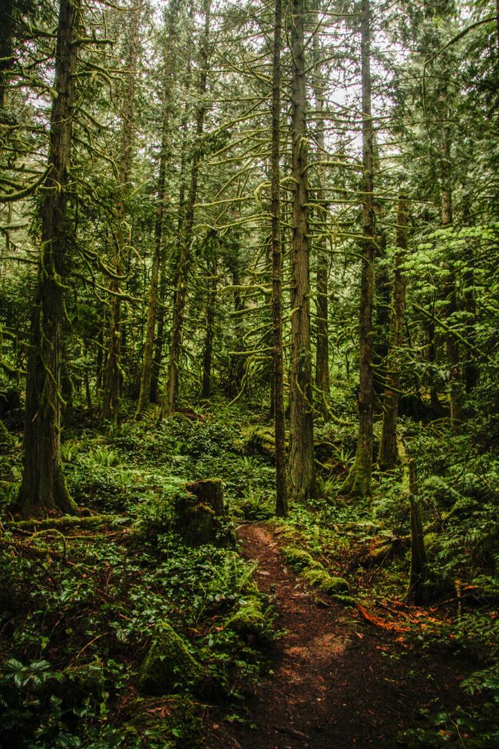 forest, trees, sooke, sooke hills