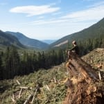 louis bockner, logging, deforestation, vancouver island, forestry, save old growth