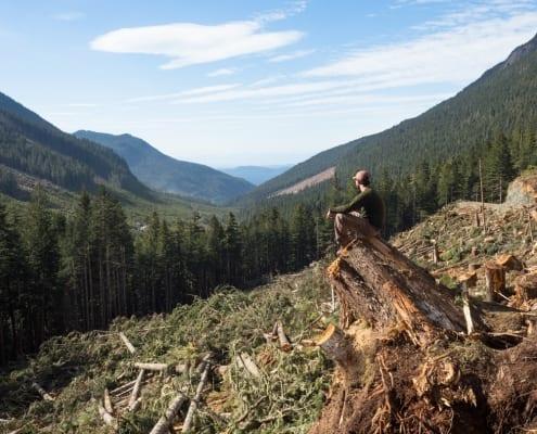 louis bockner, logging, deforestation, vancouver island, forestry, save old growth
