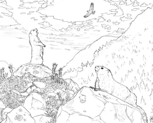 Vancouver Island marmot colouring page