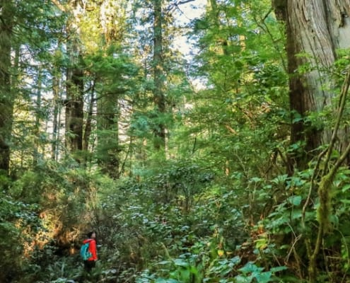 meares island, forest