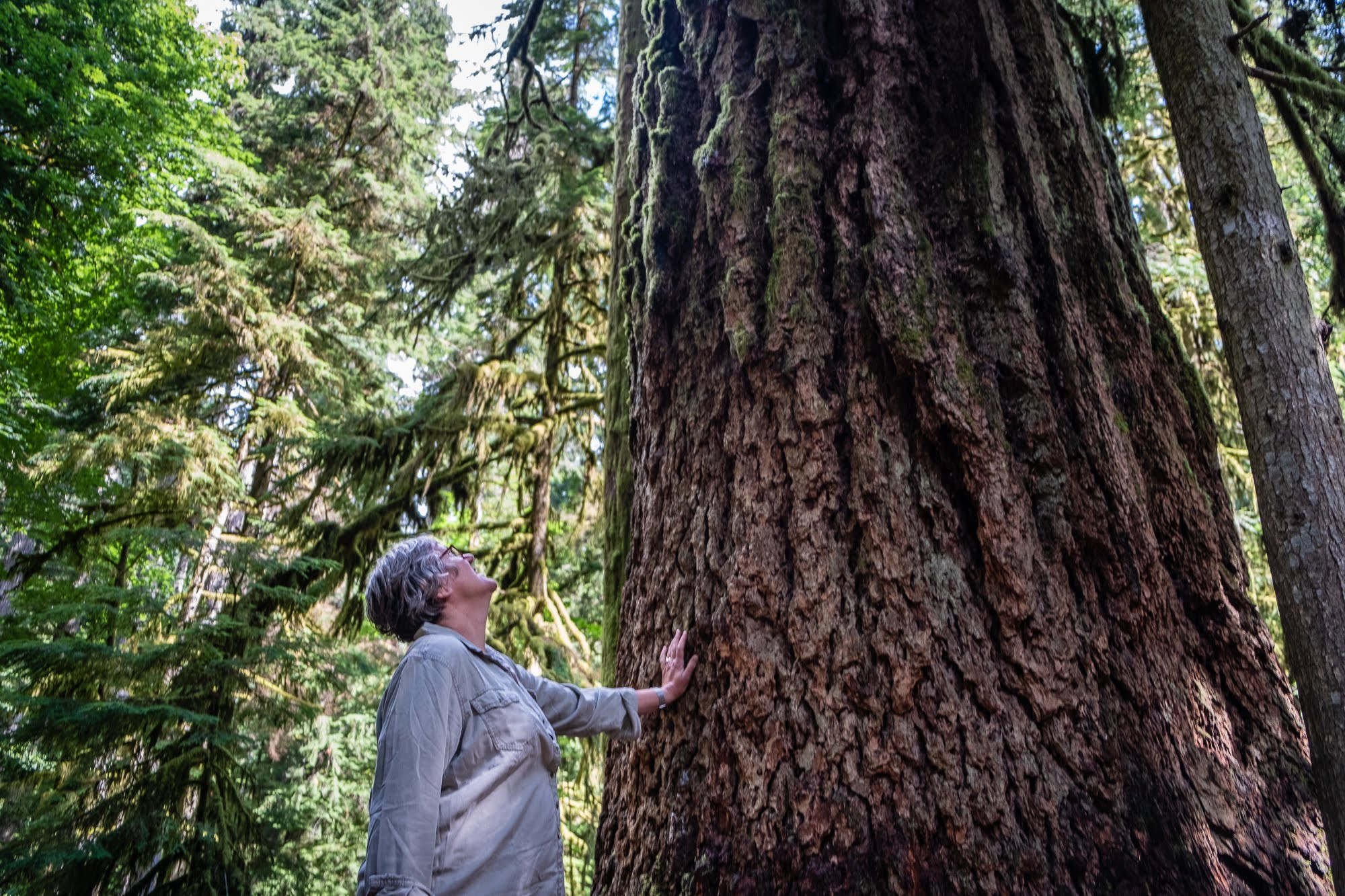 cathedral grove, old growth, ancient forests, forest