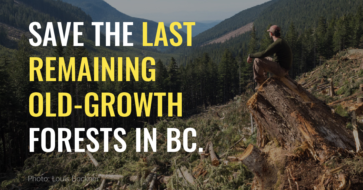 Save the last remaining old-growth in BC!