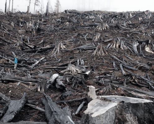 A burnt clearcut on Vancouver Island.